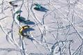 snowkite-19
